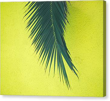 Canvas Print featuring the photograph Frond by Maggy Marsh