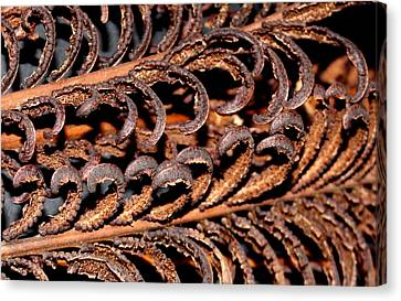 Canvas Print featuring the photograph Fronds  by Diane Merkle