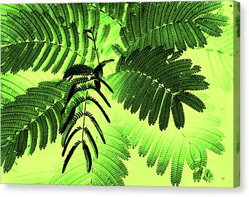 Fronds Canvas Print by Gerlinde Keating - Keating Associates Inc