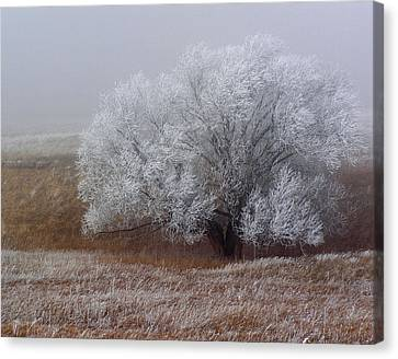 Frost And Fog Canvas Print