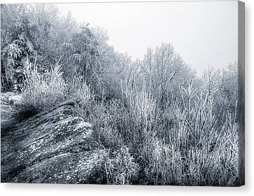 Frost At The Top Canvas Print