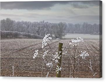 Frost-covered Rural Field Cumbria Canvas Print by John Short