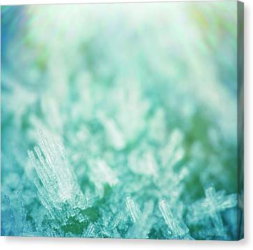 Frost Crystals Canvas Print by Wim Lanclus