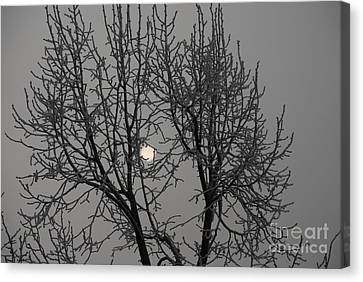 Silver Moonlight Canvas Print - Frost, Ditchling, Sussex, Uk by English School