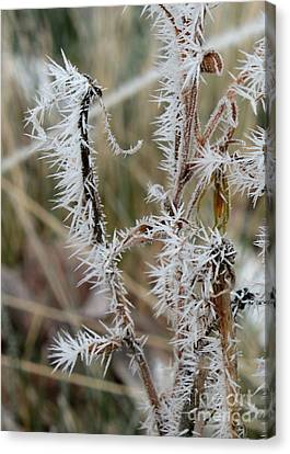 Frost Every Which Way Canvas Print by Carol Groenen