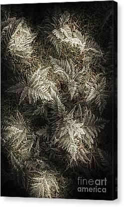 Frost Ferns Canvas Print by Jorgo Photography - Wall Art Gallery