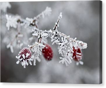 Frost Canvas Print by Frank Tschakert