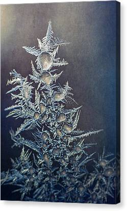 Frost Canvas Print by Scott Norris
