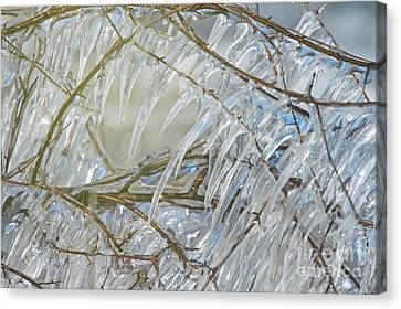 Canvas Print featuring the photograph Frostbite.. by Nina Stavlund
