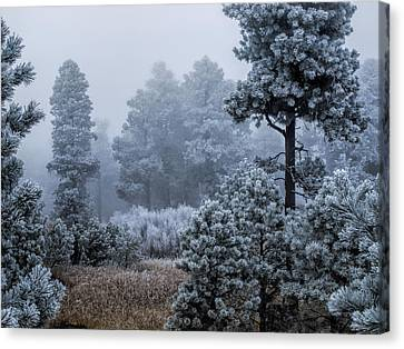 Frosted Canvas Print by Alana Thrower