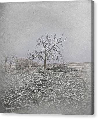 Bare Trees Canvas Print - Frosted by Amanda Smith