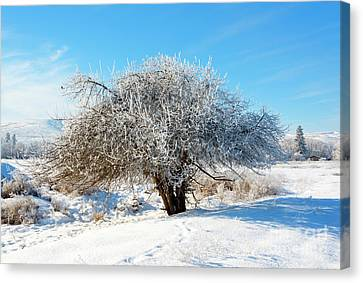 Frosted Apple Tree Canvas Print by Mike Dawson
