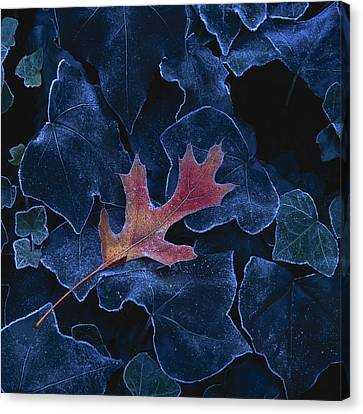 Frosted Leaf And Ivy Canvas Print