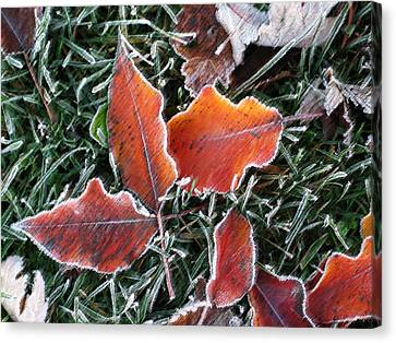 Canvas Print featuring the photograph Frosted Leaves by Shari Jardina