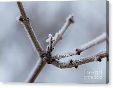 Canvas Print featuring the photograph Frosted Morning by Ana V Ramirez