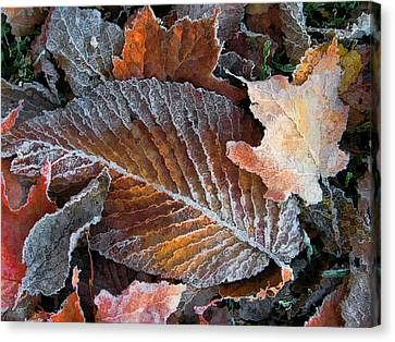Canvas Print featuring the photograph Frosted Painted Leaves by Shari Jardina