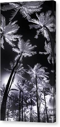 Frosted Palms Canvas Print by Sean Davey