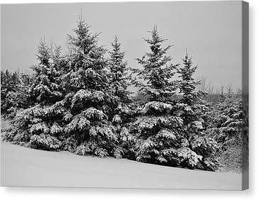Canvas Print featuring the photograph Frosted Trees by Kathleen Sartoris