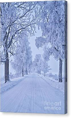 Frosted Trees Canvas Print by Veikko Suikkanen