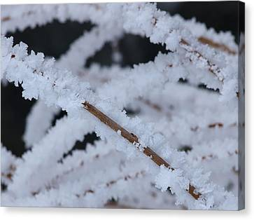 Canvas Print featuring the photograph Frosted Twigs by DeeLon Merritt