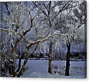 Frosted Twilight Canvas Print