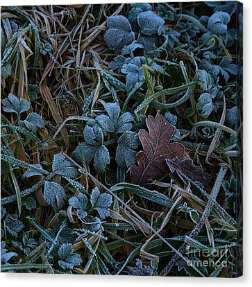 Frostings 4 Canvas Print