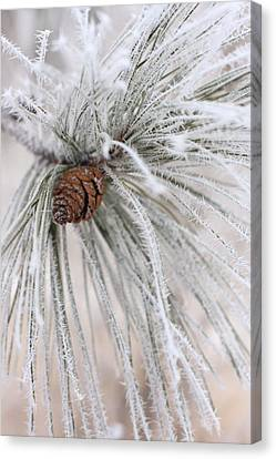 Frosty Canvas Print
