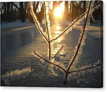 Frosty Branches At Sunrise Canvas Print by Kent Lorentzen