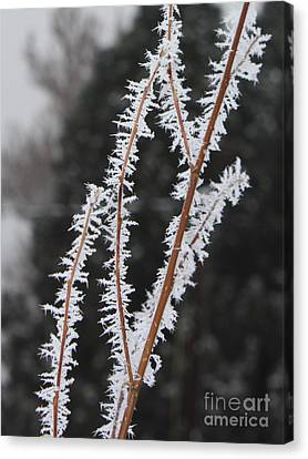 Frosty Branches Canvas Print by Carol Groenen