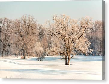 Frosty Forest Canvas Print by Todd Klassy