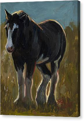 Steele Canvas Print - Frosty Morning by Billie Colson