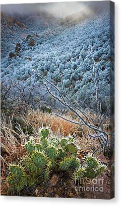 Frosty Prickly Pear Canvas Print by Inge Johnsson
