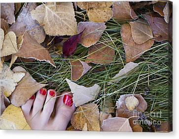 Frosty Toes Canvas Print