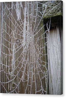 Frosty Web Canvas Print