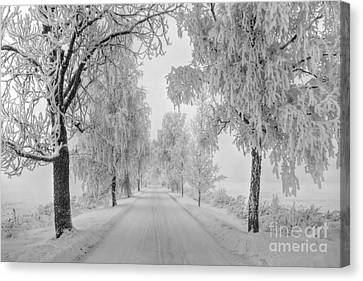 Frosty Winter Morning Canvas Print by Veikko Suikkanen