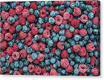 Frozen Berries Canvas Print by Tim Gainey