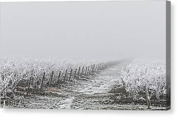 Frozen Blueberry Mist Canvas Print