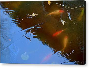 Frozen Carp Canvas Print