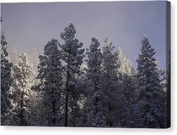 Canvas Print featuring the photograph Frozen by Ellen Heaverlo
