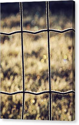 Frozen Fence Canvas Print by Wim Lanclus