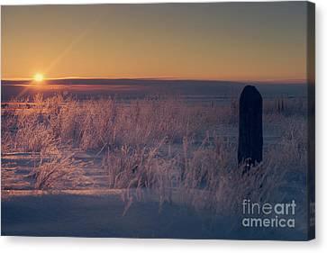 Frozen Field Sunrise Canvas Print by Ian McGregor
