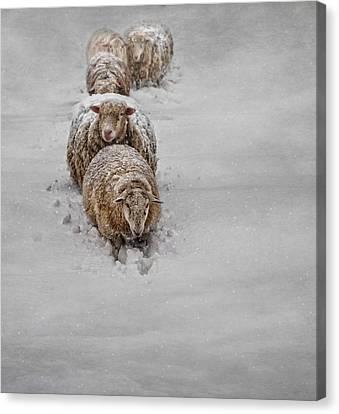 Frozen Fleece Canvas Print by Robin-Lee Vieira