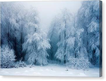 Frozen Forest Canvas Print by Evgeni Dinev