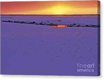 Frozen Grass At Sunset Canvas Print