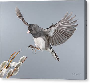 Canvas Print featuring the photograph Frozen In Time by Gerry Sibell