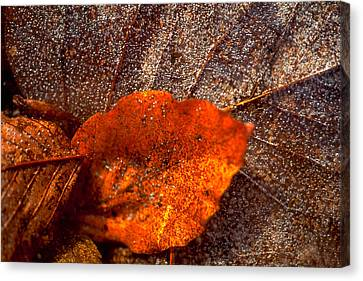 Frozen Leaf Canvas Print by Michael Mogensen