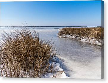 Frozen Marsh Canvas Print by Gregg Southard