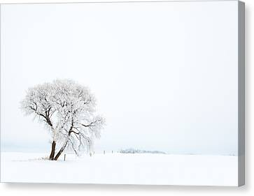Frozen Morning Canvas Print