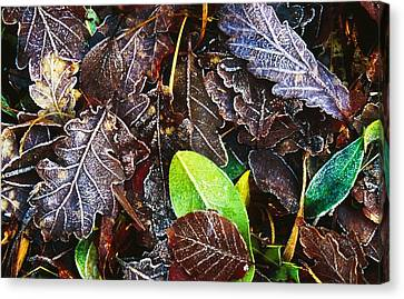 Frozen Oak Leaves, Glenveagh National Canvas Print by Gareth McCormack