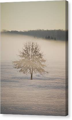 Frozen  Canvas Print by Peter  McIntosh